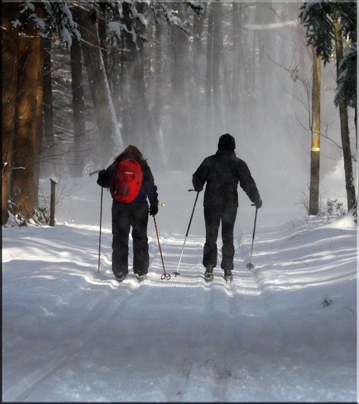 Cross Country Ski | Winding Trails